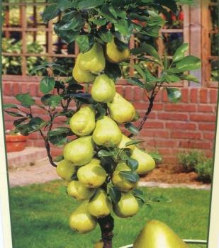 Фото растений